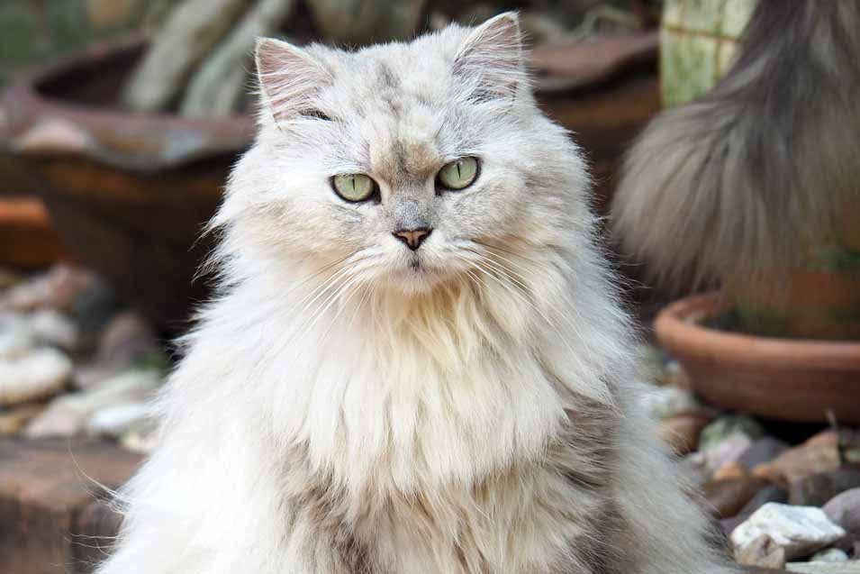 Picture of a cat outdoors