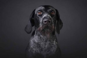 Picture of a dog on smoky background