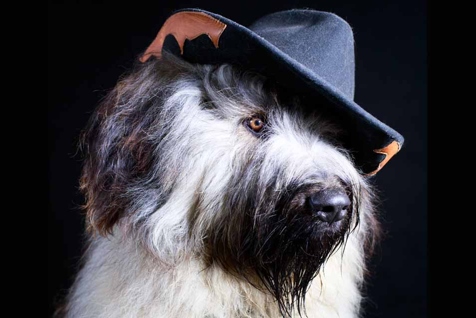 Picture of a dog wearing a cowboy hat