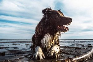 Picture of a wet dog on the beach