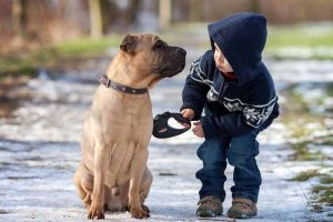 Picture of a boy and dog