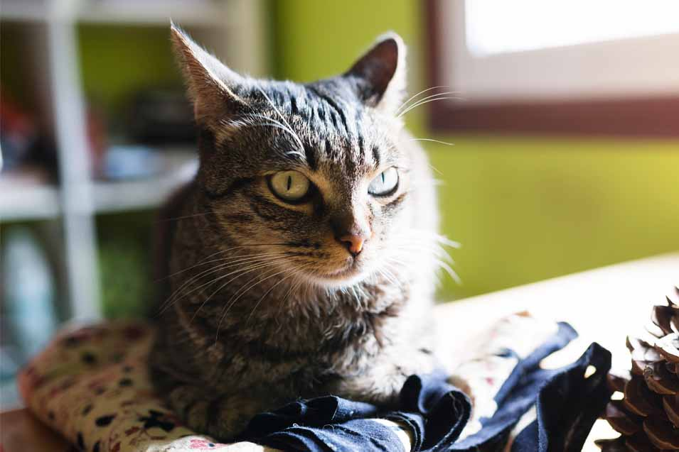 Picture of a stressed cat