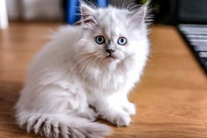 Picture of a kitten