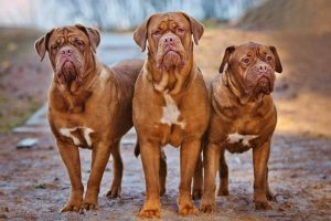Picture of 3 dogs