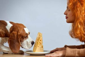 Picture of a dog and a slice of cheese