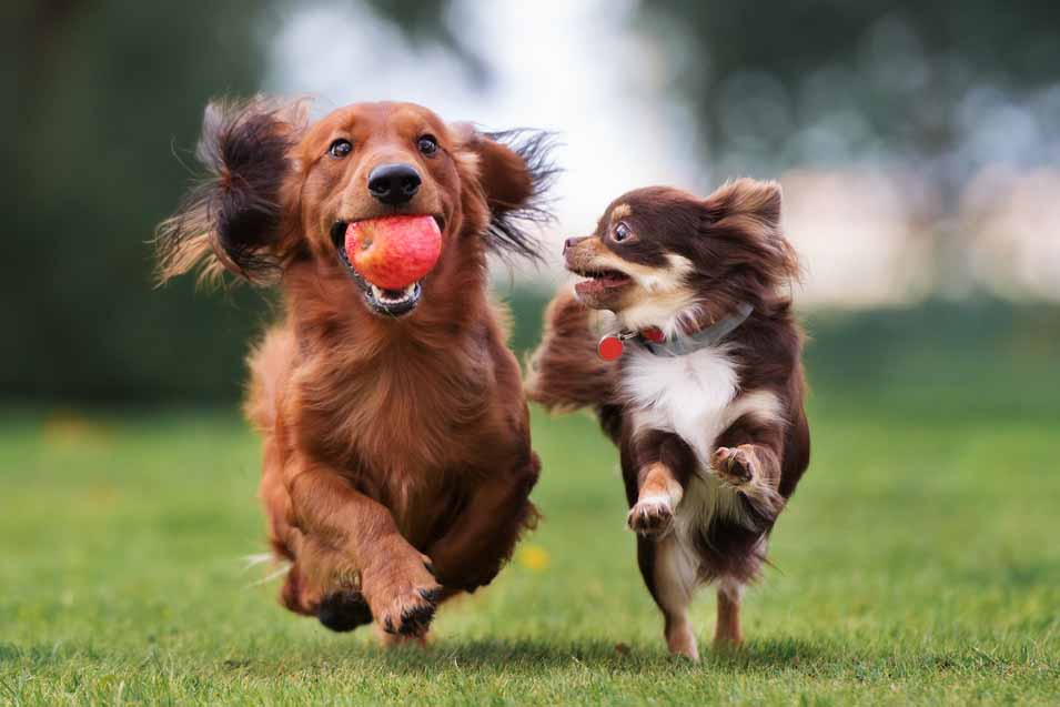 Picture of two dogs