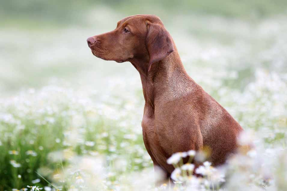 Picture of a dog in the field
