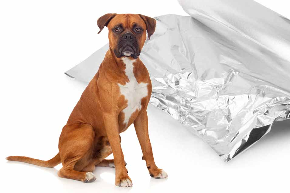 Picture of a dog and aluminum foil