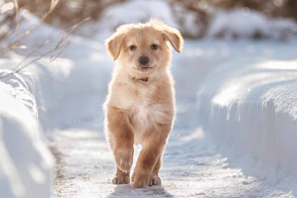 Picture of a puppy in the snow