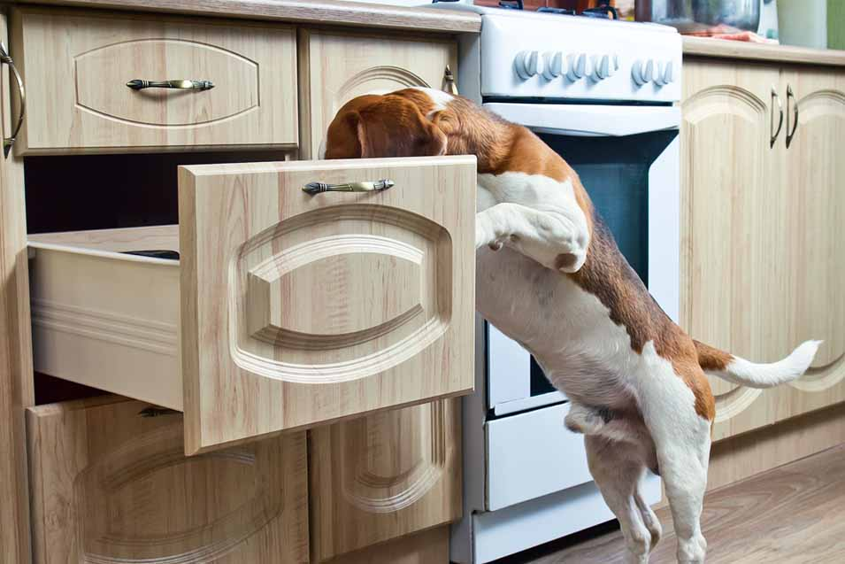 picture of a dog in kitchen cabinet