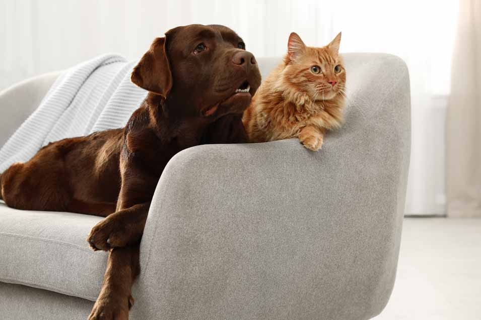 Picture of a dog and cat on a sofa