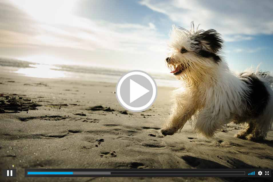 Picture of a dog on the beach