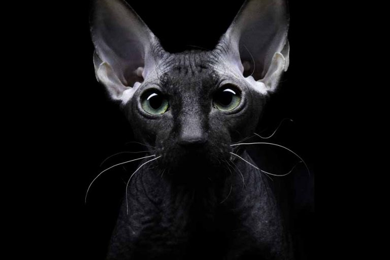 Picture of a cat in the dark