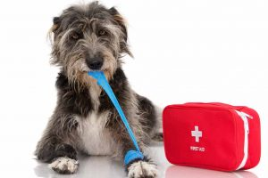 Picture of a dog with first aid kit