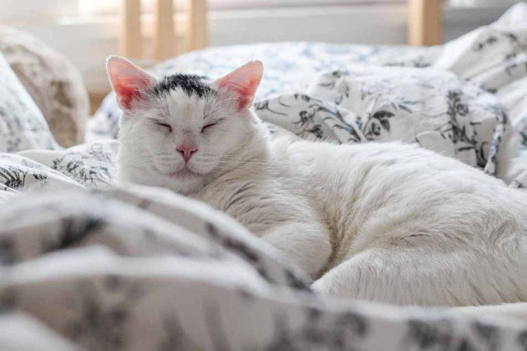 Picture of a cat in bed