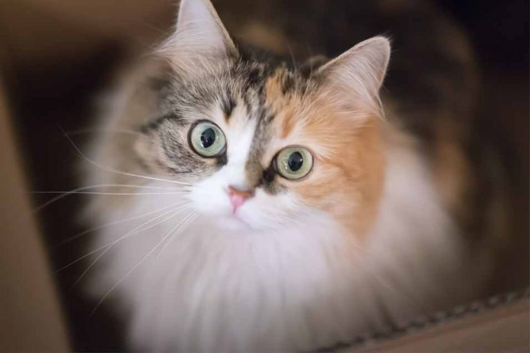 Picture of a Moggy Cat