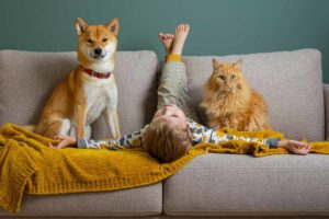 What is pet dander