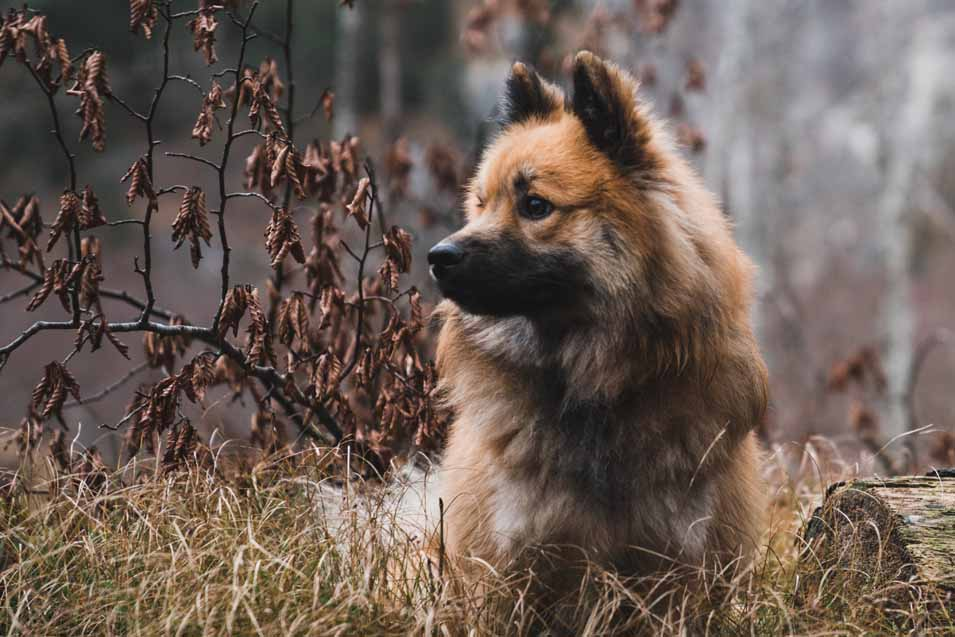 picture of a dog in the forest